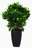 Realistic Artificial Plant 65cm Ficus Ball