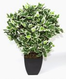 Realistic Artificial Plant 65cm Variegated Ficus Ball