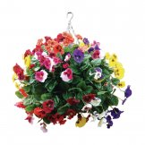 "Bolero 22"" Mixed Colours Pansy Ball"